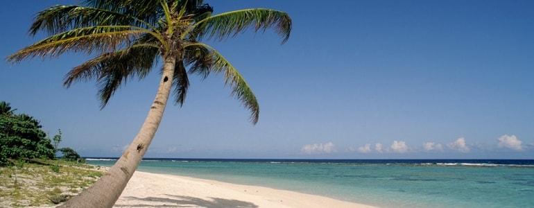 Strand und eine Palme zu erkennen